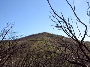 La Gomera - Garajonay
